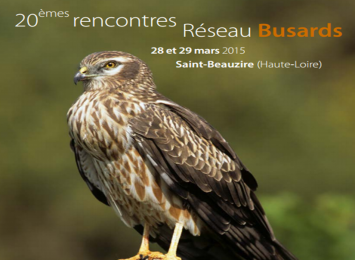 Rencontres busards